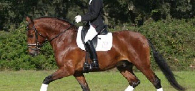 Cavalos Lusitanos em Verden
