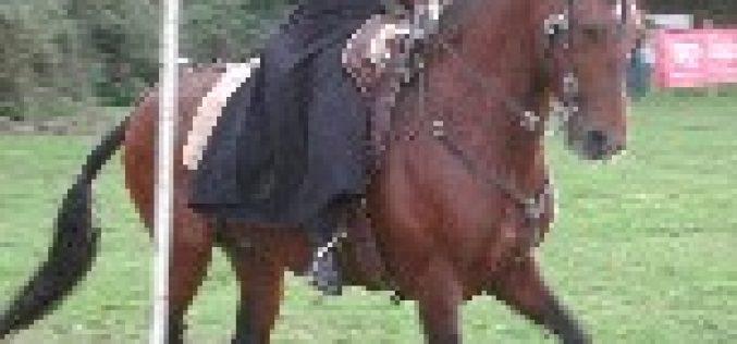Comissão Europeia para a Equitação de Trabalho