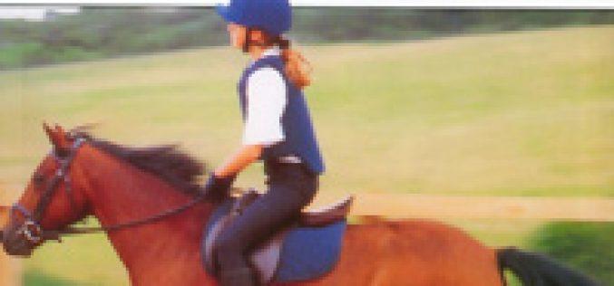 Novidade: Como Cuidar do Seu Cavalo