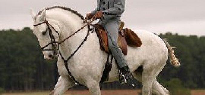 Americanos foram os grandes compradores dos cavalos PSL no Brasil