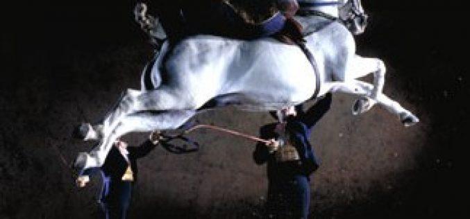 Criado o Comité Europeu do Cavalo