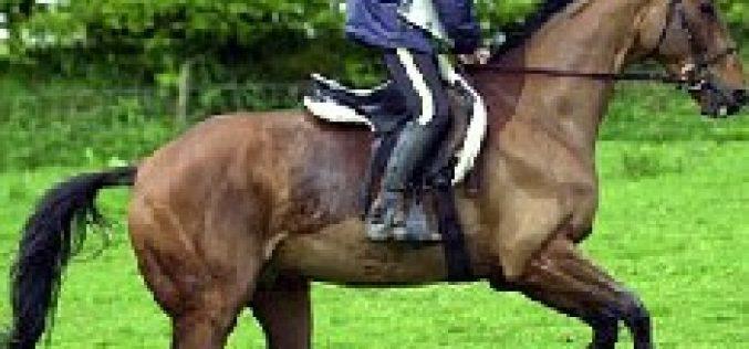Acidente trágico vitima cavaleiro de Endurance