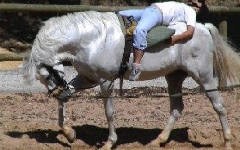 Visita mensal de crianças aos cavalos da GNR