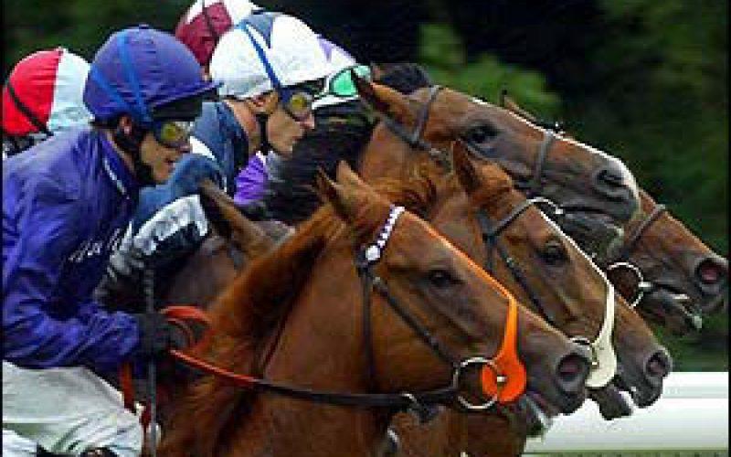 Governo abre a porta às corridas de cavalos