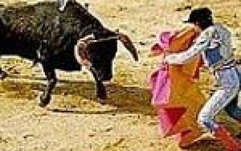Gonçalo Montoya abandonou o toureio