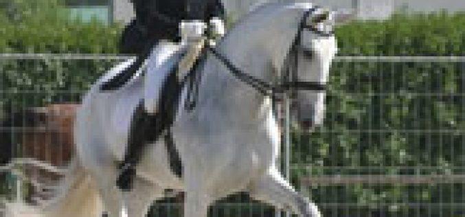 Projecto para Cavalos Lusitanos 2006