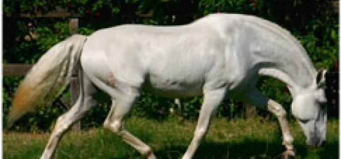 I Leilão de Cavalos no Equimagos