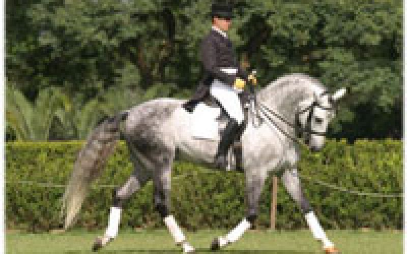The versatility of the Lusitano at the Expo Equi