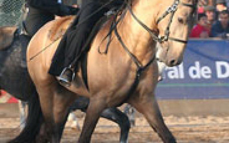 Golegã, a tribute to the Iberian Horse