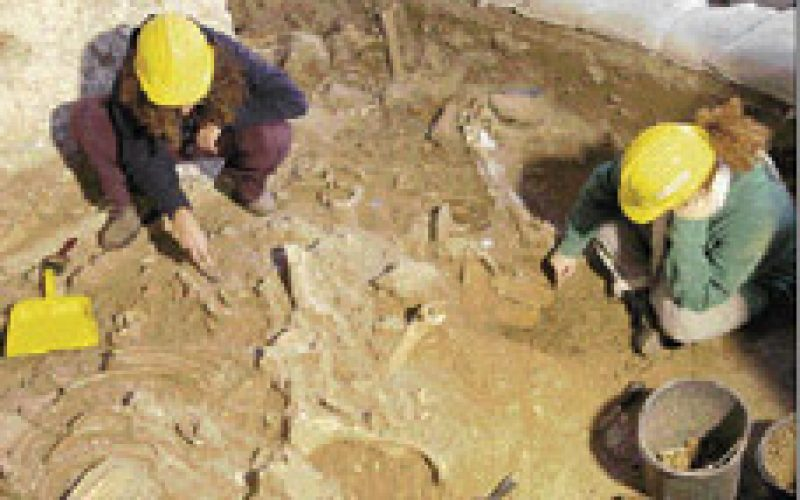Archaeologists discover ancient horse skeletons