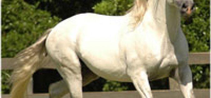 III Feira Ibérica do Cavalo