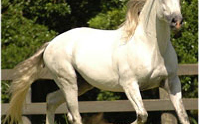 III Iberian Horse Fair (Spain)