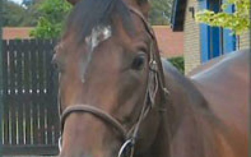 Uncertain future for Sheik Maktoum's horses