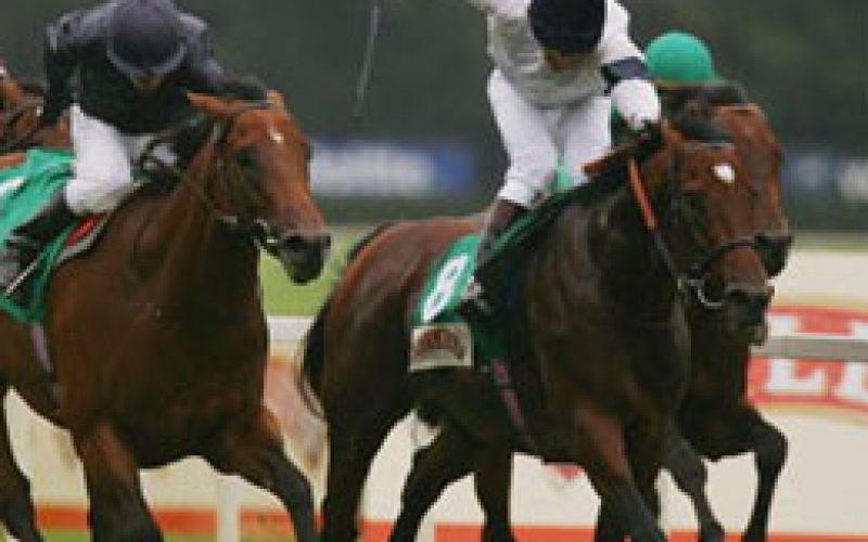Motivator named Horse of the Year