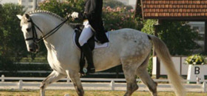 BRASIL: Cavalo Lusitano é destaque no Ensino