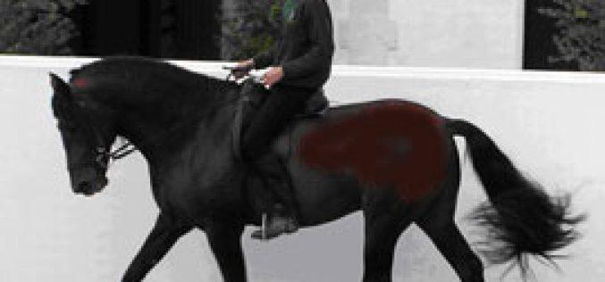 Real Escuela Andaluza – Leilão de Cavalos
