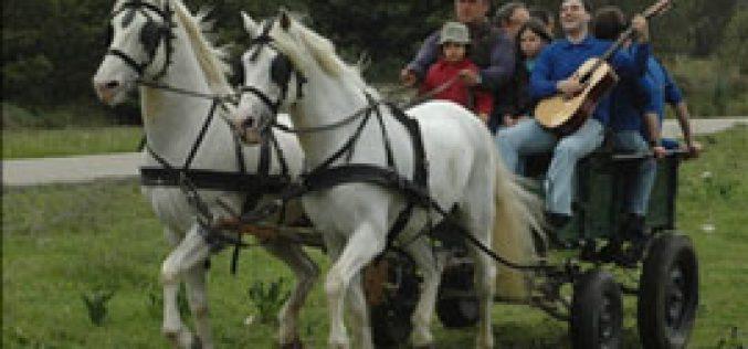 Espírito do Pátio organizou o 1º Passeio Equestre