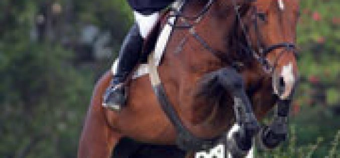 IV Vilamoura Equestrian Tour – Young Horses
