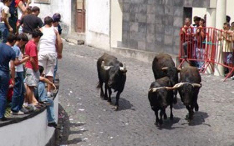Samora Correia: Touros á solta para entrar no Guiness…