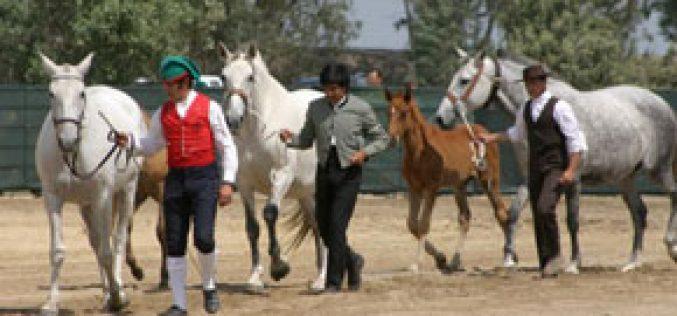 Campinos e Cavaleiros ausentes na 3ª Festa de Campo de V. F. de Xira
