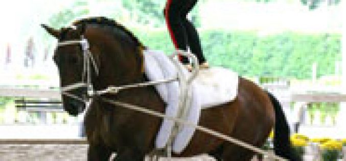 Brazilian bred Lusitano horse in the WEG 2006