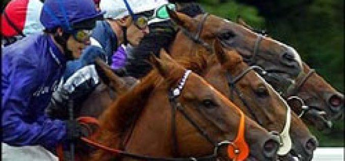 Ponte de Lima claims horse betting…