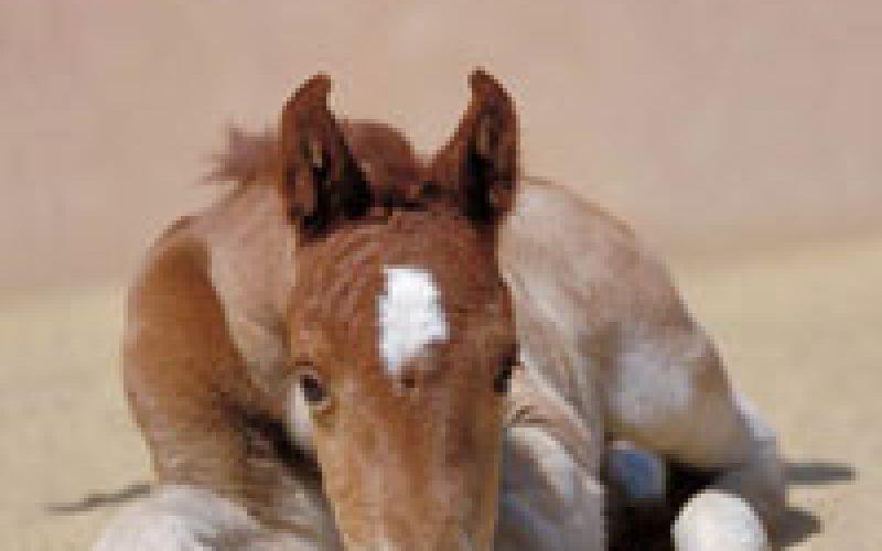 Calendários 2007 – Imagens de Cavalos