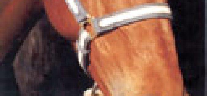 """""""O Cavalo d'Óbidos"""" com novas instalações"""