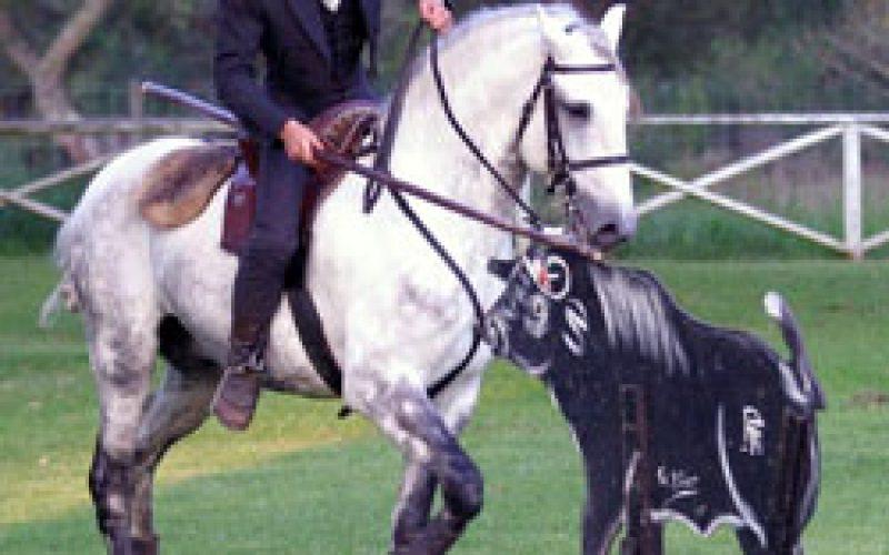 II World Working Equitation Championship