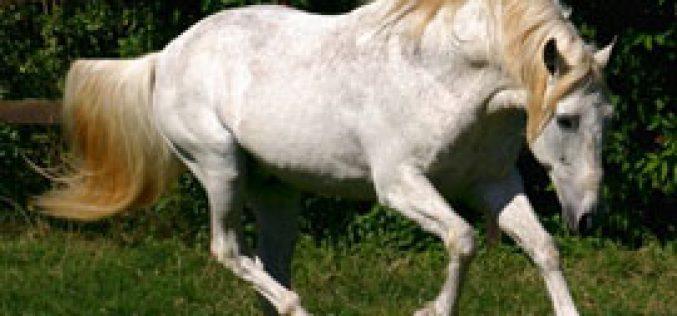 """Acção de Formação – """"Avaliação da condição corporal em equinos"""""""