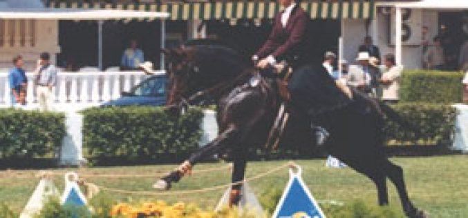 CML apoia o Mundial de Equitação de Trabalho