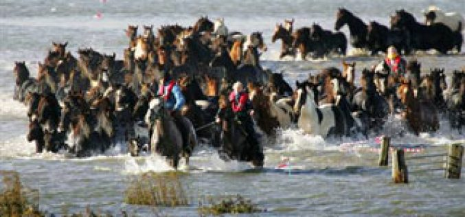 Dutch save trapped flood horses