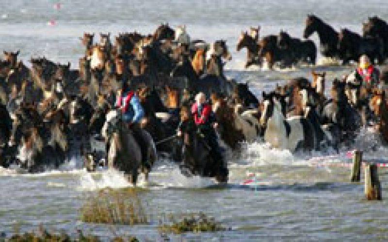 Cavalos encurralados pela subida das águas