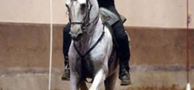 Finalmente a Equitação de Trabalho passa a disciplina federada