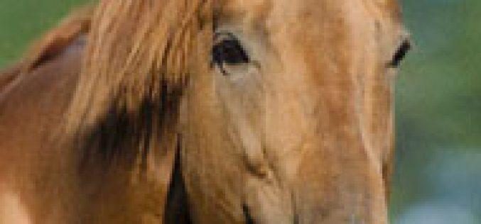 Herpes Virus Equino mata 5 Cavalos na Florida