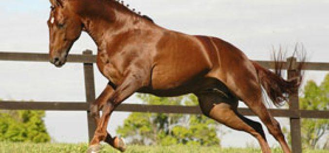 Curso Teórico e Teórico-Prático de Fisioterapia em Cavalos