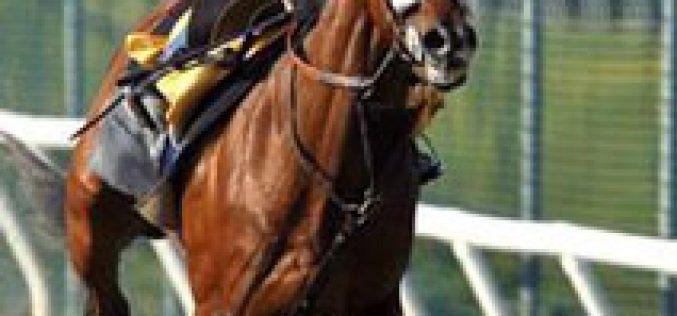 Kentucky Derby winner Barbaro put down