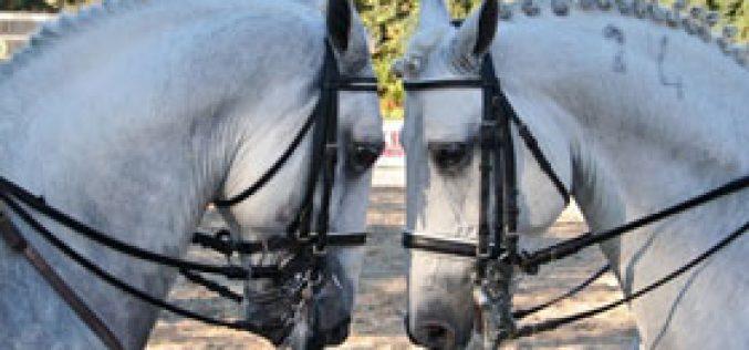 Leilão de Cavalos PSL e PSA – Santarém