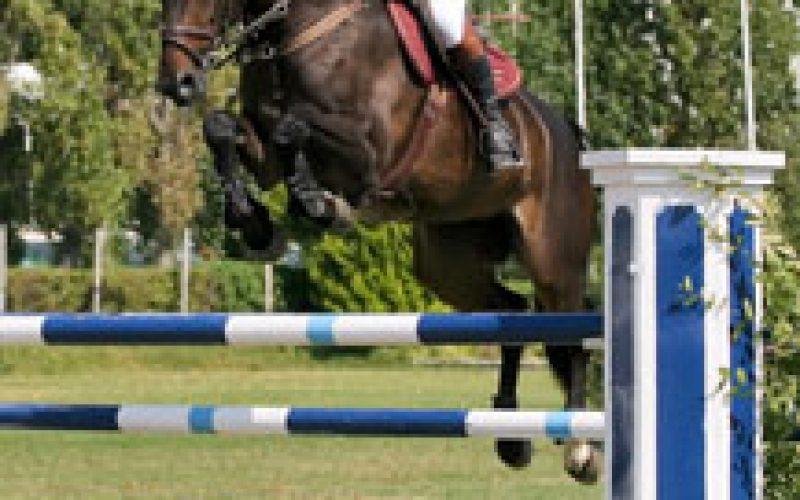 Égua vendida em Portugal venceu o CCI* de Punchestown