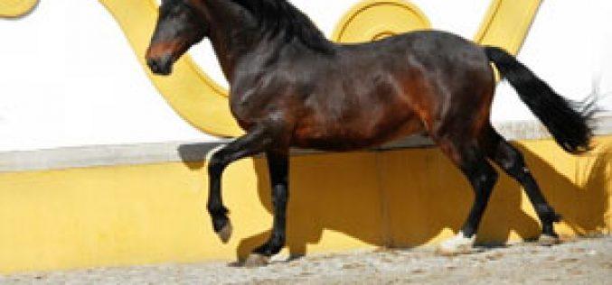 Fundação Alter Real vai preservar o cavalo lusitano