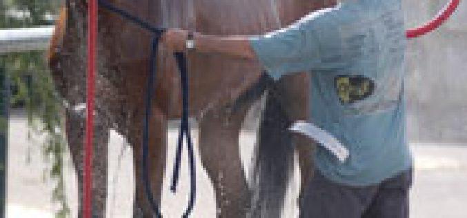 EPADRC: Curso de Tratador Desbastador de Cavalos 2007/2008