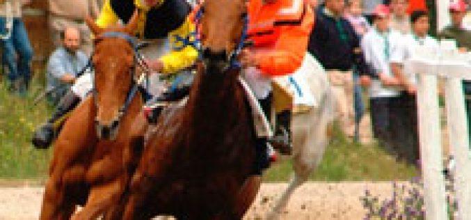 Pedras Salgadas : Corrida de Cavalos e Derby de Atrelagem