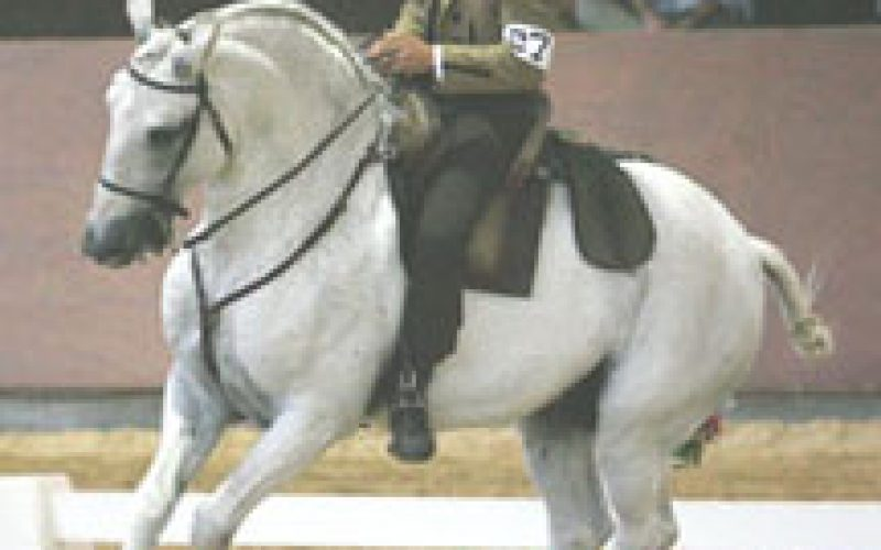 Gold for Portugal in the European Working Equitation Championships