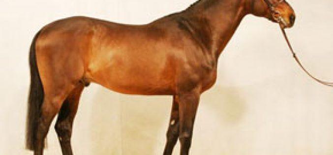 Resultados: Cto do Mundo de Saltos – Cavalos Novos – Lanaken