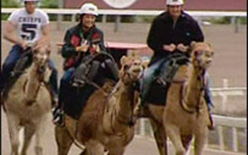 Camel racing takes off in Australia