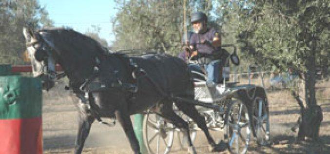 Golegã: Feira Nacional do Cavalo arrancou Sexta-feira
