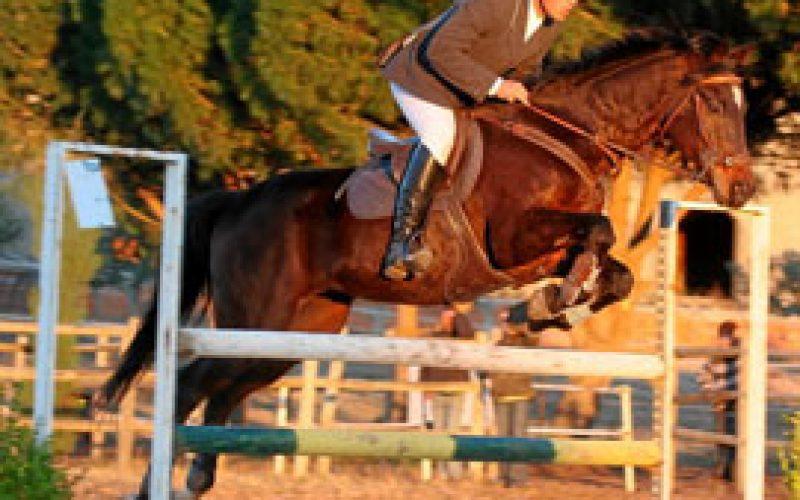 Cerca de 100 cavaleiros no Festival Hípico Centro Equestre de Abrantes