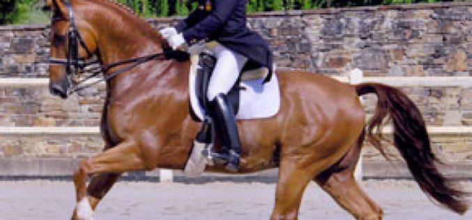 Juan Matute Campeão de Espanha de Dressage 2007