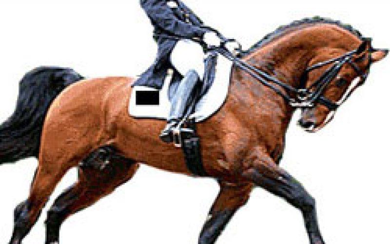 Os cavalos merecem cavaleiros com boa preparação física