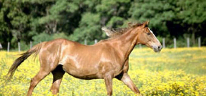 Outbreak of African Horse Sickness in South Africa